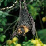 ¿Qué animal tiene en su nombre las cinco vocales?