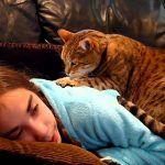 ¿Por que los gatos nos dan masajes?