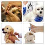 ¿Cuándo vacunar a un perro?